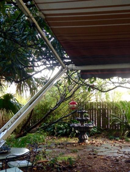 Bird feeder in my wet, messy backyard.
