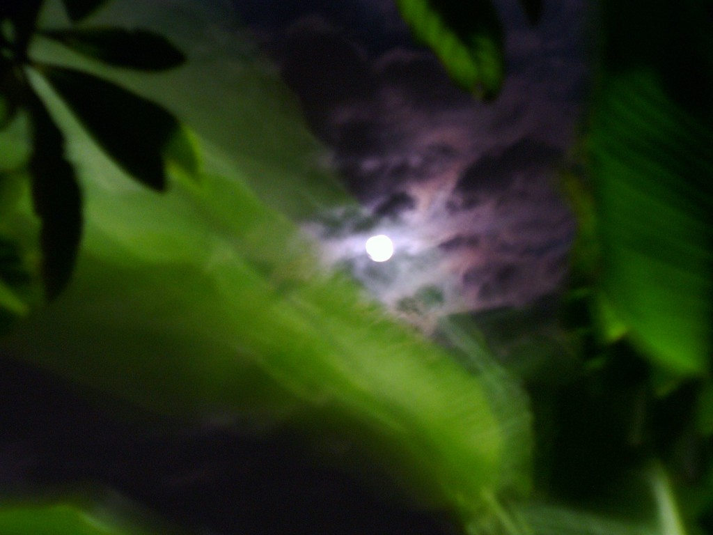 nola-moon-037